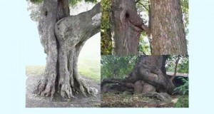 Mente Suja na Natureza