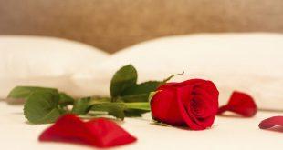 Rosas na cama