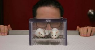 Estudo com ratos